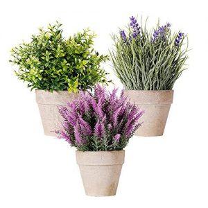 Fiori freschi e piante da appartamento